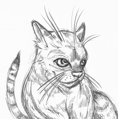 129 – A Cat